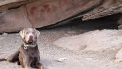 Rock Climbing Photo: Every bouldering trip needs a faithful dog along