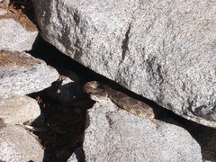 Rock Climbing Photo: Bring a stick on hot days - these guys are everywh...