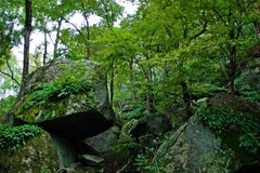 Rock Climbing Photo: The Jungley Devil's Den