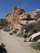Rock Climbing Photo: Short Wall, Real Hidden Valley, Joshua Tree