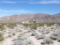 Rock Climbing Photo: Morbid Mound, Joshua Tree