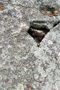 Rock Climbing Photo: A well guarded pocket on Lichen or Leave It