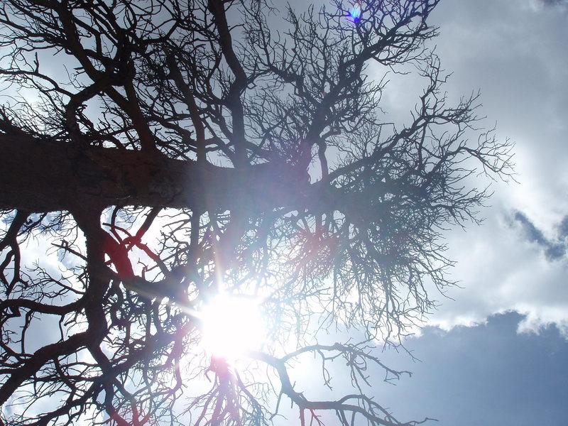 Shade tree.