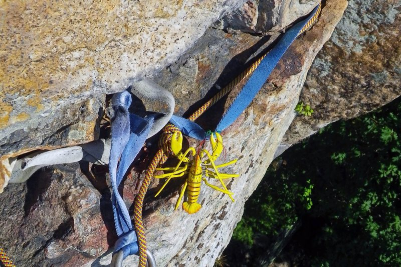 Rock Climbing Photo: KARMIC RELIEF: Chigger / lobster hybrid ?