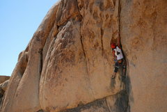 Rock Climbing Photo: Colorado Crack, J Tree 2010