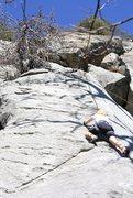 Rock Climbing Photo: Nicole Hardenbergh on Bee Tree.