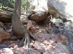 Rock Climbing Photo: Gabion project area.