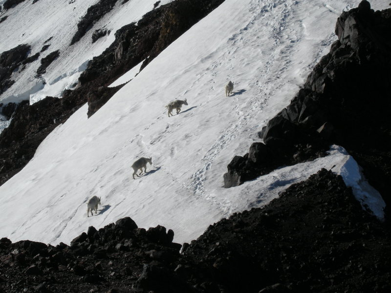 Four expert climbers on the North Ridge.