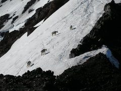 Rock Climbing Photo: Four expert climbers on the North Ridge.