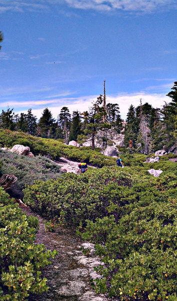 As you get into the trail that is lined by beautiful manzanita,the cairns will be more frequent.Leading you up over a small ridge,then to the approach gully.