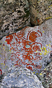 Rock Climbing Photo: Start with the natural lichen art