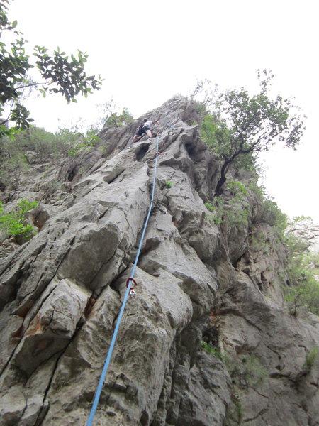 Rock Climbing Photo: A look straight up Lotus.