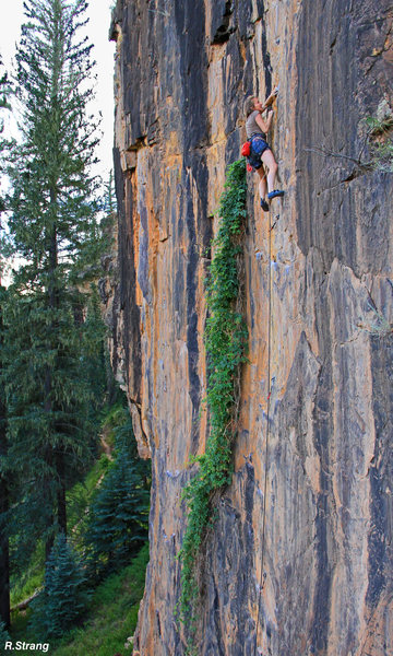 Andrea moves past the hops and the crux.<br> Mild Hops (5.10).