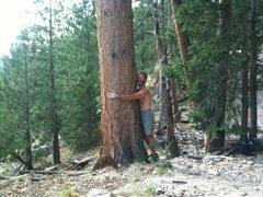 Rock Climbing Photo: tree hugging dirt worshipper