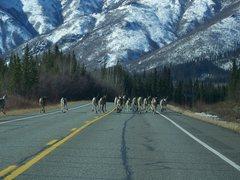 Rock Climbing Photo: Caribou