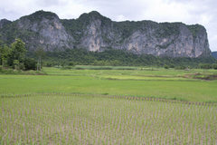 Rock Climbing Photo: Among the rice fields of North East Thailand are t...
