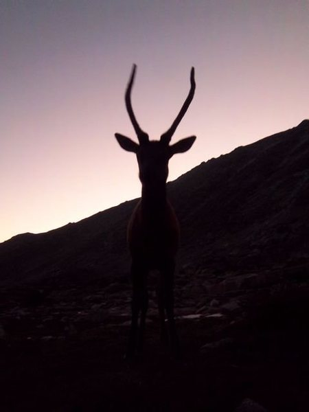 Rock Climbing Photo: Elk getting up in our faces at Spearhead bivy.