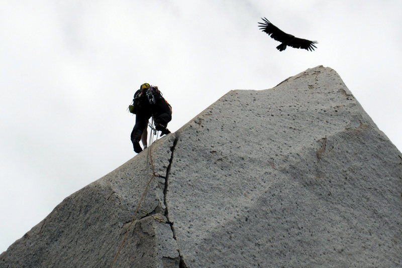 A climber getting a condor flyby on Trinidad wall.