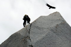 Rock Climbing Photo: A climber getting a condor flyby on Trinidad wall.