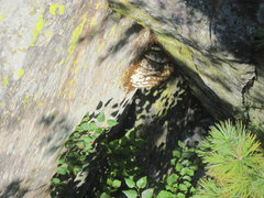 Rock Climbing Photo: HUGE bees nest just left of the rap chains from th...