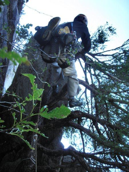 "Rock Climbing Photo: ""Europa"", pitch 4 tree"