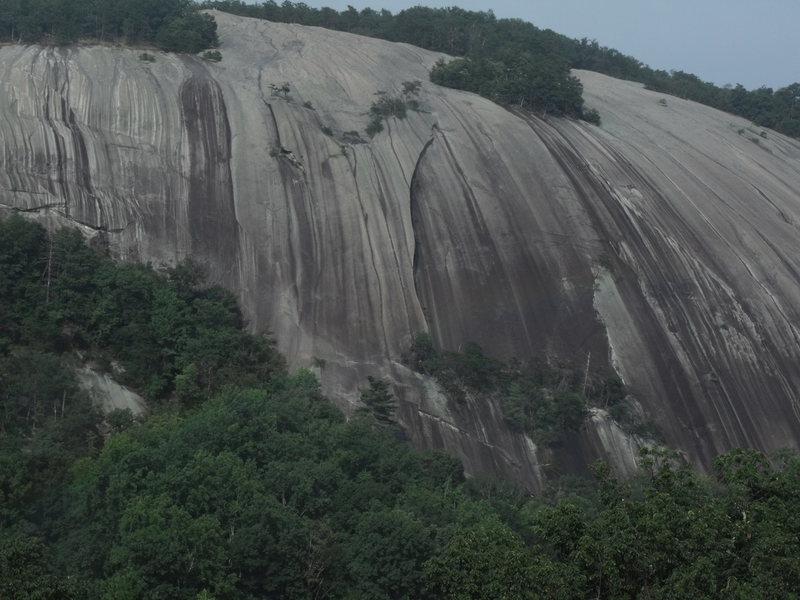 Close up from wolf/cedar rocks