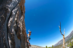 Rock Climbing Photo: Stoic Tree Arete with the fish-eye.  Photo by Dale...