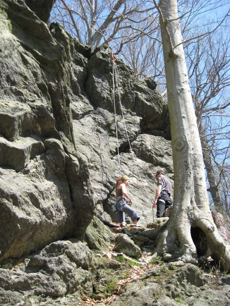 Rock Climbing Photo: Short right side of Livezey Rock. 20' routes to bo...
