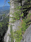 """Rock Climbing Photo: Belay in the """"magic Tree"""" atop pitch 8"""