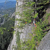 """Belay in the """"magic Tree"""" atop pitch 8"""