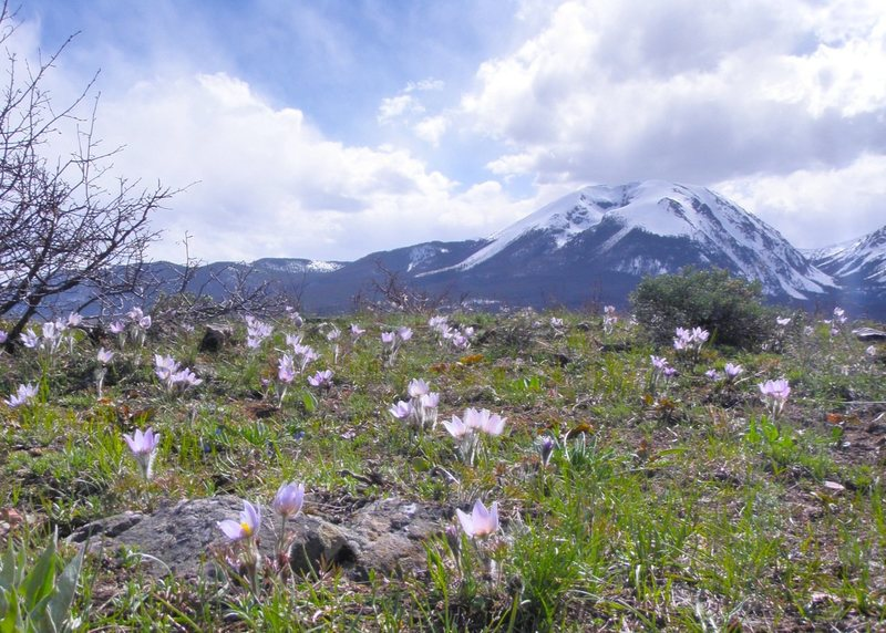 Buffalo Mountain and pasque flowers.