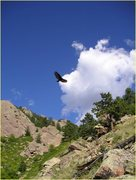Rock Climbing Photo: Prairie falcon near Hillybilly Rock.