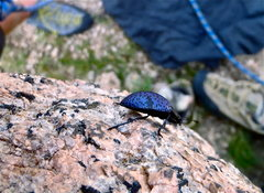 Rock Climbing Photo: Lots of these guys hopping all over us!