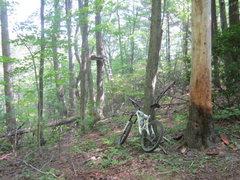 Rock Climbing Photo: Head down hill towards the deer stand.