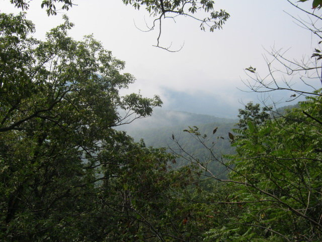 Rock Climbing Photo: Foggy view from atop Wineberry Cliff.