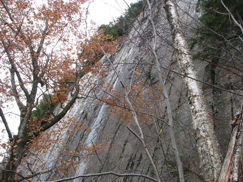 Part of the Premarital Wall - It looks nasty here, all wet, but it is about 80 feet tall, just off vertical and covered with finger cracks. There is one route currently here, Premarital Blisters 5.11 that needs to be rescrubbed.