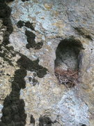 Rock Climbing Photo: bird nest in a nice hold.