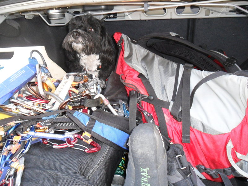 Rock Climbing Photo: Sammy in the trunk.  Everytime we opened up the tr...