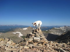 Rock Climbing Photo: Summit 14'er