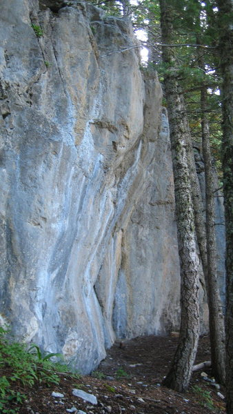 Rock Climbing Photo: Lee Faria. The tree looks close, but provided you ...