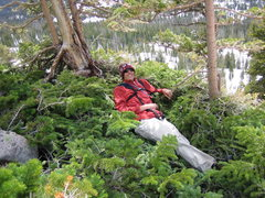 Rock Climbing Photo: taking a rest in some trees half way up Hayden's P...