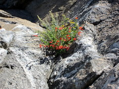 Rock Climbing Photo: Beastly flowers