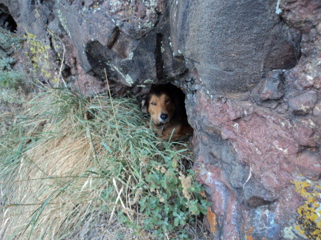Rock Climbing Photo: Good hole for dog protection.