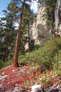 Rock Climbing Photo: Early fall colors at The Sunshine Wall, Spearfish ...