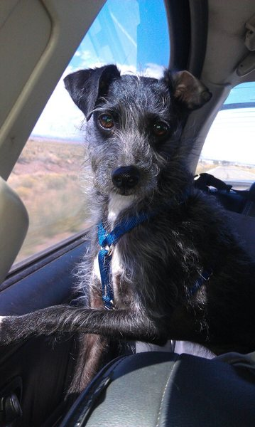 Rock Climbing Photo: Lost dog on 9/19/2011.  We were at The Bank campsi...