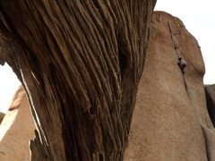 Rock Climbing Photo: Lisa approaches the business on I'd Rather Be In P...