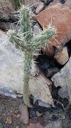 Rock Climbing Photo: Hug meeeeeeeeeee!
