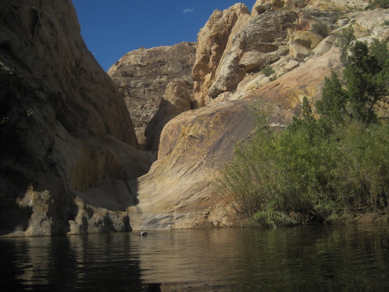 Bess enjoying a swim at the entrance to a previously unknown Reef Canyon