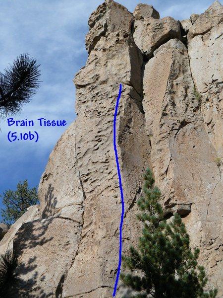 Rock Climbing Photo: Brain Tissue (5.10b), Clark Canyon