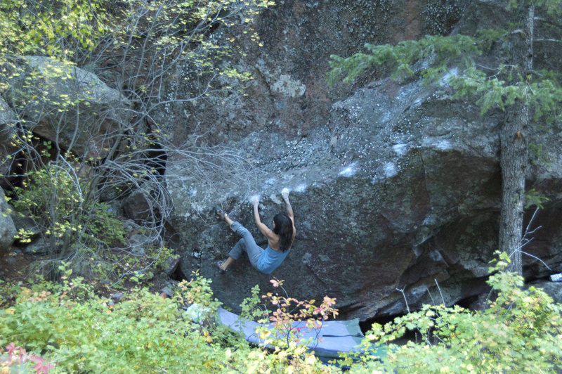 Sarah starts the Survival of the Fitness, V7.